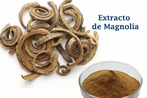Extracto de Magnolia